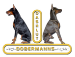 Dobermanns de Dashlut